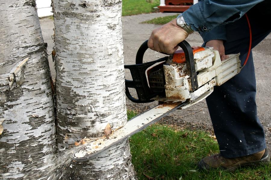 Baumfällarbeiten als Betriebskosten umlegbar?