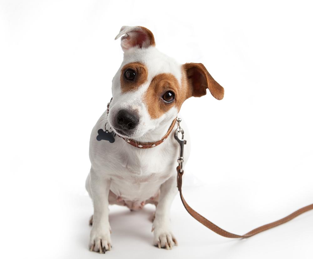 Eigentumswohnung - Anleinpflicht für einen jungen Hund eines Mieters